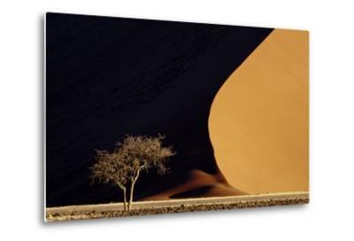 Namibia, Namib-Naukluft Park. Red Sand Dunes Contrast and Tree-Jaynes Gallery-Metal Print