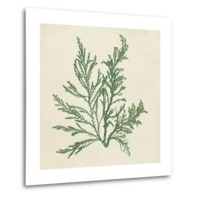 Chromatic Seaweed I-Vision Studio-Metal Print