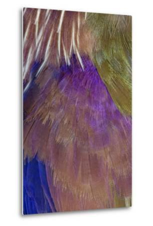 Neck and Chest Feather Pattern of Roufus-Crowed Roller-Darrell Gulin-Metal Print