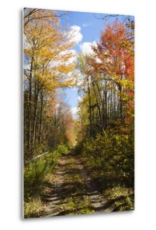 USA, Maine, Bar Harbor. Path in Fall Colors of Red and Gold Foliage-Bill Bachmann-Metal Print
