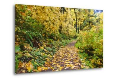 Fall Colors Add Beauty Trail, Silver Falls State Park, Oregon-Craig Tuttle-Metal Print