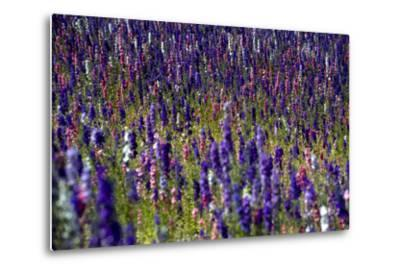 Flowers at a Farm in the Willamette Valley of Oregon-Bennett Barthelemy-Metal Print