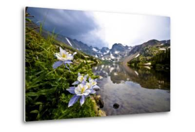 Colorado Columbines Blooming in Early July with Spring Run Off, Indian Peaks Rocky Mountains-Daniel Gambino-Metal Print