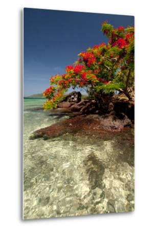 Christmas Tree at Vonu Point, Turtle Island, Yasawa Islands, Fiji-Roddy Scheer-Metal Print