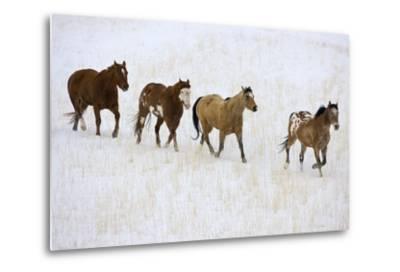 American Quarter Horses in Winter-Darrell Gulin-Metal Print