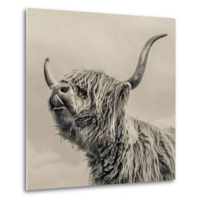 Highland Cattle-Mark Gemmell-Metal Print