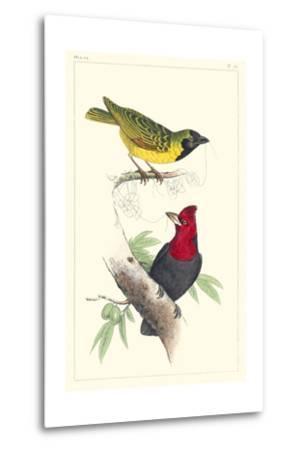 Lemaire Birds II-C.L. Lemaire-Metal Print