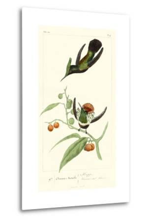 Lemaire Hummingbirds III-C.L. Lemaire-Metal Print