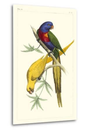 Lemaire Parrots IV-C.L. Lemaire-Metal Print