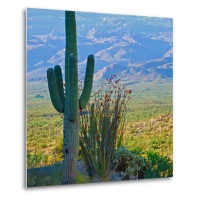 Saguaro Cactus in Saguaro National Park, Arizona,USA-Anna Miller-Metal Print