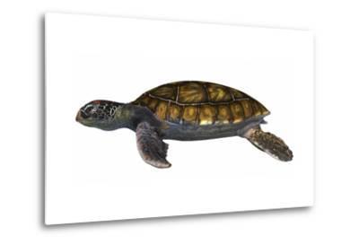 Green Sea Turtle--Metal Print