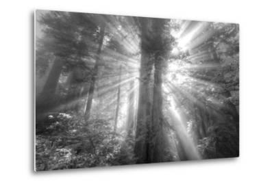God Beams and The Redwoods (Black and White)-Vincent James-Metal Print