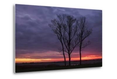 Sunrise Trees at Ogunquit, Maine Coast-Vincent James-Metal Print