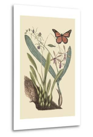 Monarch Butterfly-Mark Catesby-Metal Print