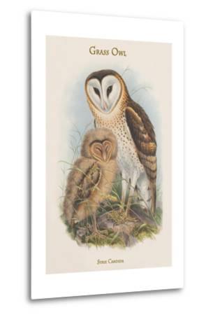 Strix Candida - Grass Owl-John Gould-Metal Print