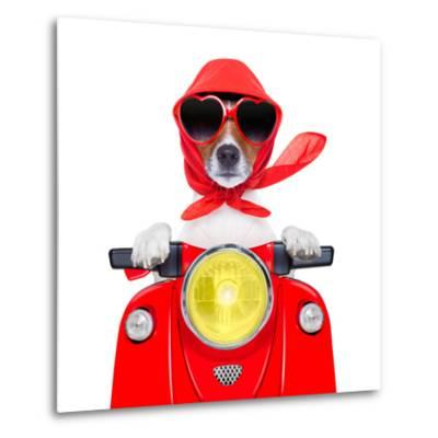 Motorcycle Dog Summer Dog-Javier Brosch-Metal Print