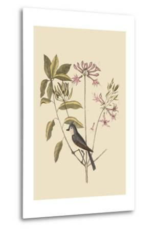 Crested Titmous-Mark Catesby-Metal Print