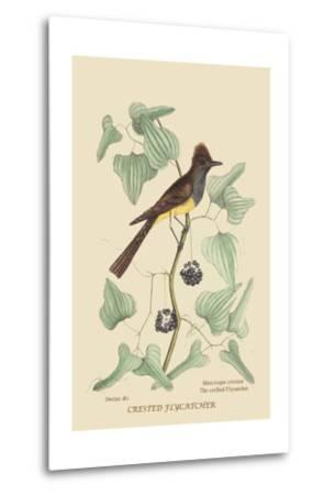 Crested Fkycatcher-Mark Catesby-Metal Print