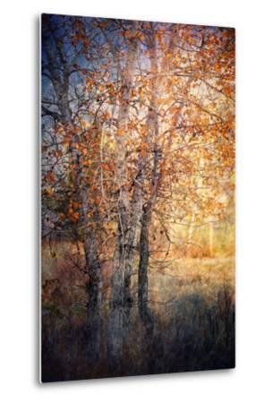 Kootenay Fall 2-Ursula Abresch-Metal Print