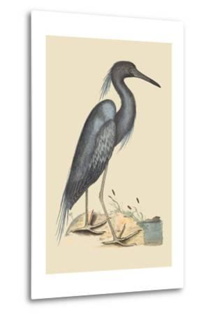 Blue Heron-Mark Catesby-Metal Print