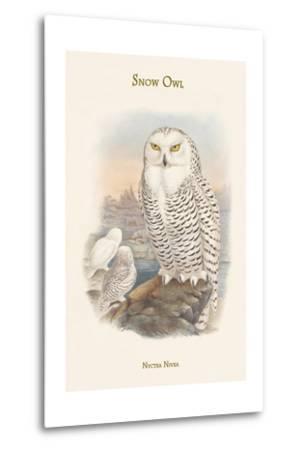 Nyctea Nivea - Snow Owl-John Gould-Metal Print