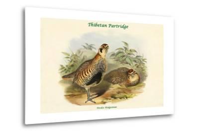 Perdix Hodgsoniae - Thibetan Partridge-John Gould-Metal Print