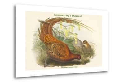 Phasianus Soemmerringii - Soemmerring's Pheasant-John Gould-Metal Print