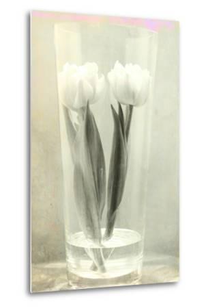 White Tulips-Mia Friedrich-Metal Print