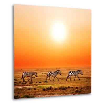 Zebras Herd on Savanna at Sunset, Africa. Safari in Serengeti, Tanzania-Michal Bednarek-Metal Print