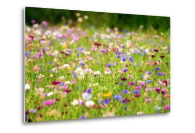 Field of Flowers in Paintography-Philippe Sainte-Laudy-Metal Print