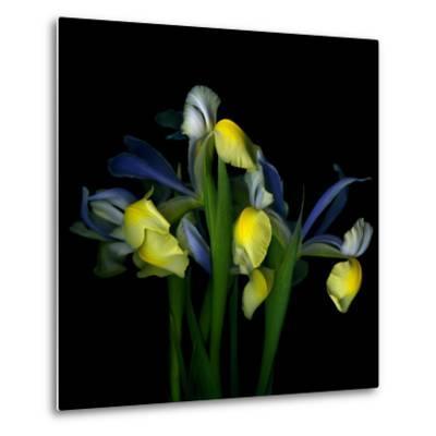 Blue Iris-Magda Indigo-Metal Print