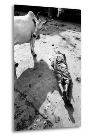 Prostrate Man Praying and Cow, Jagannath Temple, Puri, Orissa, India, 1977--Metal Print