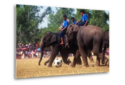 Elephants Playing Soccer, Elephant Round-Up, Surin, Thailand--Metal Print