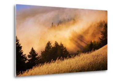 Fog and Light Collision Mount Tamalpais, Marin County, San Francisco-Vincent James-Metal Print