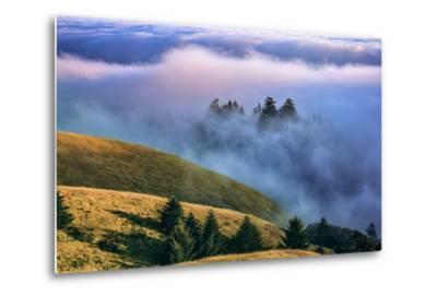 Magical Land of Fog and Light, Mount Tamalpais State Park, California-Vincent James-Metal Print
