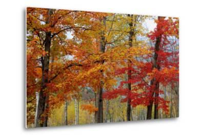 Autumn Foliage, Lincoln New Hampshire, New England-Vincent James-Metal Print