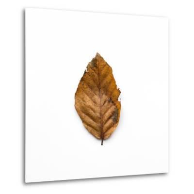 Decaying Leaf-Clive Nolan-Metal Print