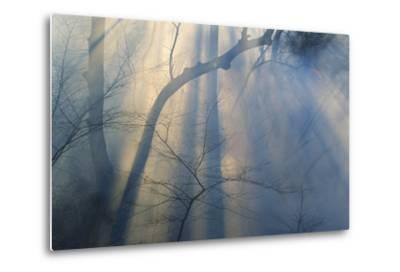 Smoke from Prairie Burn Through Woodland Hollow-Michael Forsberg-Metal Print