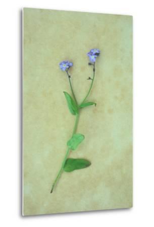 Single Flower-Den Reader-Metal Print