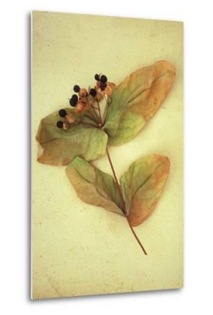 Dried Plant-Den Reader-Metal Print