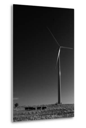 A Herd of Cattle Walk in a Pasture Below a Modern Wind Turbine-Michael Forsberg-Metal Print