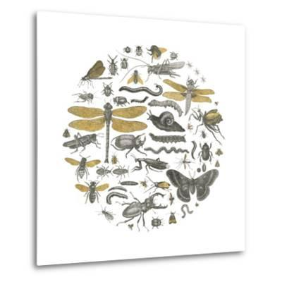 Insect Circle I-Wild Apple Portfolio-Metal Print