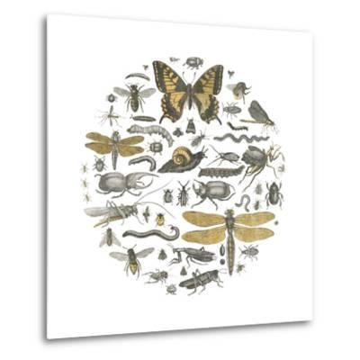 Insect Circle II-Wild Apple Portfolio-Metal Print