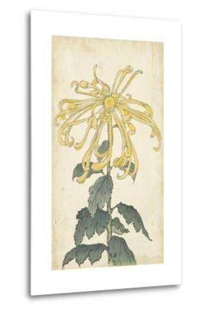 Elegant Chrysanthemums II--Metal Print