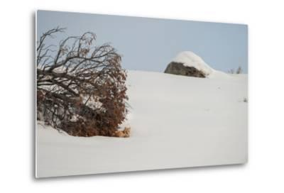 A Red Fox Rests under a Tree in a Snowy Landscape-Tom Murphy-Metal Print