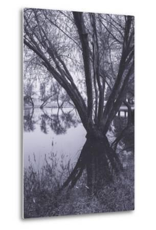 Tree and Pond Reflections at Marin County Pond California-Vincent James-Metal Print