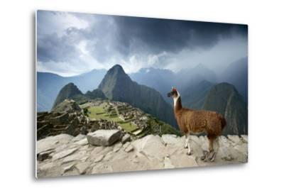 A Llama Overlooks the Pre-Columbian Inca Ruins of Machu Picchu-Jim Richardson-Metal Print