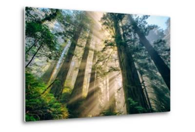Divine Forest Light Coast Redwoods Del Norte California-Vincent James-Metal Print