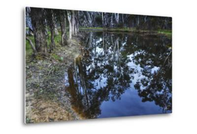 Tree Reflections, Grampians National Park, Australia-Keith Ladzinski-Metal Print