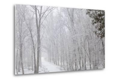 Winter Snowstorm on Manassas National Battlefield Park's Stone Bridge Trail in Virginia-Hannele Lahti-Metal Print
